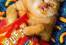 чарли хитон и коты