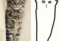 """""""cat.egories"""""""