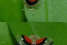 Cool insects!