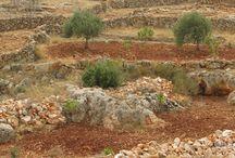 Сирия - Природа