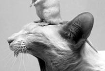 Крысы&Co