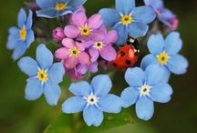 Ladybugs for Darla
