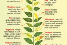 Deficiency in plants