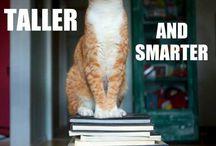animals and books