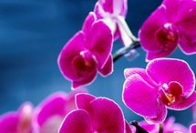 Recomendos orchides / Ideer til layouts recomendos.dk