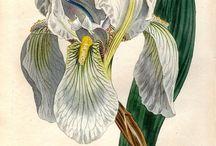 ботаник