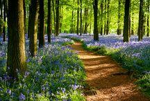 pathways / places I'd probably enjoy walking. / by Myles Blackwood