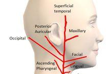 anatomía 1er bloque