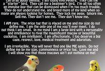love my birdies