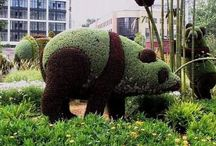 Topiary Love / by Terri Altherr