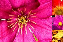 Analiza kolorystyczna: Czysta Wiosna (Clear Spring)