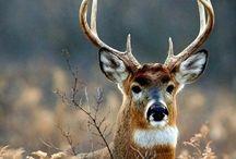 Beautiful Wild Animals.