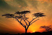 Sunrises...sunsets / by Cymoni Larsen