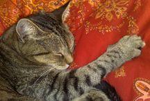 Gatti Cats / Il mio animale preferito, il gatto