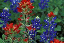 Texas / by Mary Liz Benton