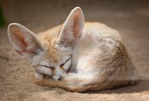 foxies :D
