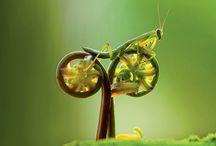 Look Closer / by Sierra Club