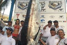 Bisbee's Black and Blue Marlin Tournament 2016