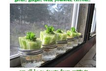 Growing your own food