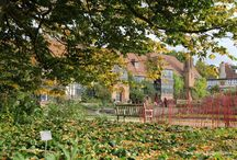 Autumn / Lovely things to do in Autumn, gardens to visit, plants to grow, gardening advice for Autumn - autumn gardening jobs.
