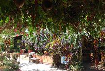 Garden Travel / Visits to garden destinations around the world I've been to.