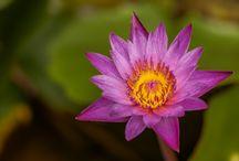 Flowers / Flowers Macro