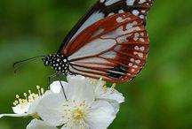πεταλούδες-butterflies