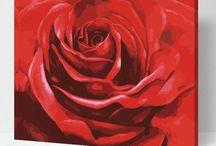 12. Juni 2017 Tag der roten Rose