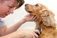 Dog grooming ❤️