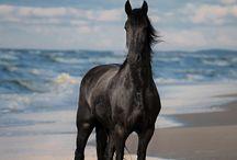 Fab horses