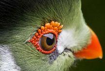 Birds & Colors