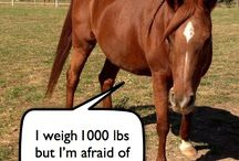 Horsey stuff - humour/interest