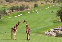 Golfparadies Südafrika