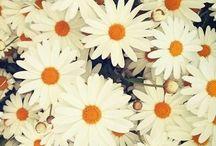 Flower / Cute !