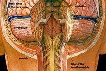 building body knowledge