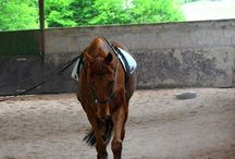 ♦ My horse center ♦ / My horse center ≡ Ponies ≡ Horses ≡ Personal Photos