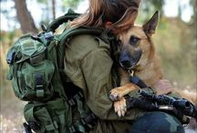 Army dog's love