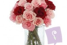 Pink and Red Roses in a vase