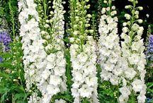 Kvety - moja najväčšia láska / Milujem všetko, čo je spojené s kvetmi a prírodou :-)