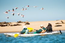 Hoanib Skeleton Coast Camp / Showing pictures of wildlife at the amazing and iconic Hoanib Skeleton Coast Camp in Namibia.  For more info go: http://www.rowadventures.com/hoanib-camp-skeleton-coast-namibia