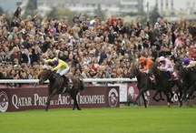 Racing Icons / A collection of iconic images from racing's great history. Browse through more iconic images at Racing Post Photos