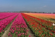Travel / Holland and Normandy  / by Alexandra Bongaerts-duval