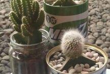 Cactusista