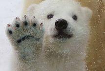 Bears / by Debbie Beals