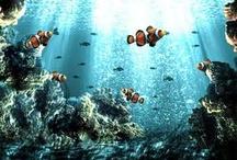 Underwater World / There is magic in underwater world..