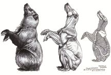 Bear power