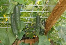 Heminredning / Grönsaker