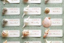 Conchas de praia
