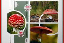 page champignons