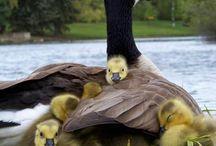 zvířecí a ptačí rodina